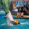 Дельфинарии, океанариумы в Кущевской