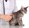 Ветеринарные клиники в Кущевской